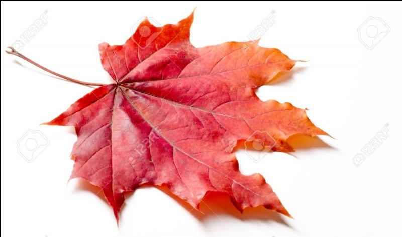 De quelle couleur sont les feuilles vertes ?