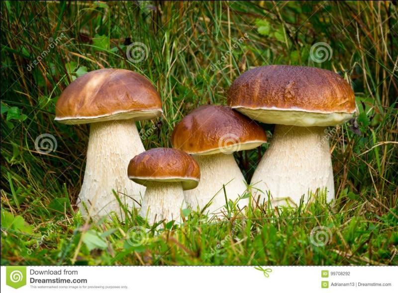 Ce champignon à tubes et à gros pied est-il comestible ?