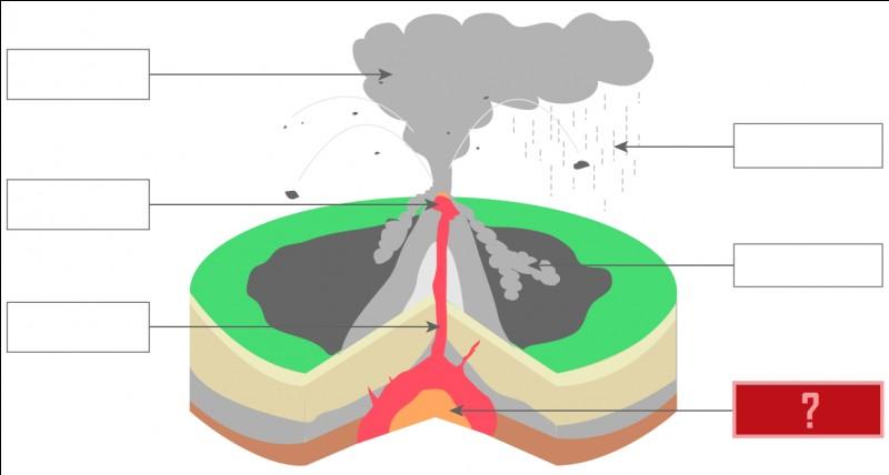 /Sciences de la Vie et de la Terre/ Complétez la case rouge de ce schéma.