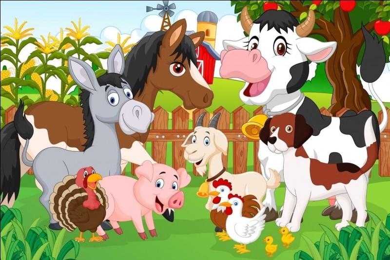 Quel animal assez peu appétissant est l'une des spécialités de la région ?
