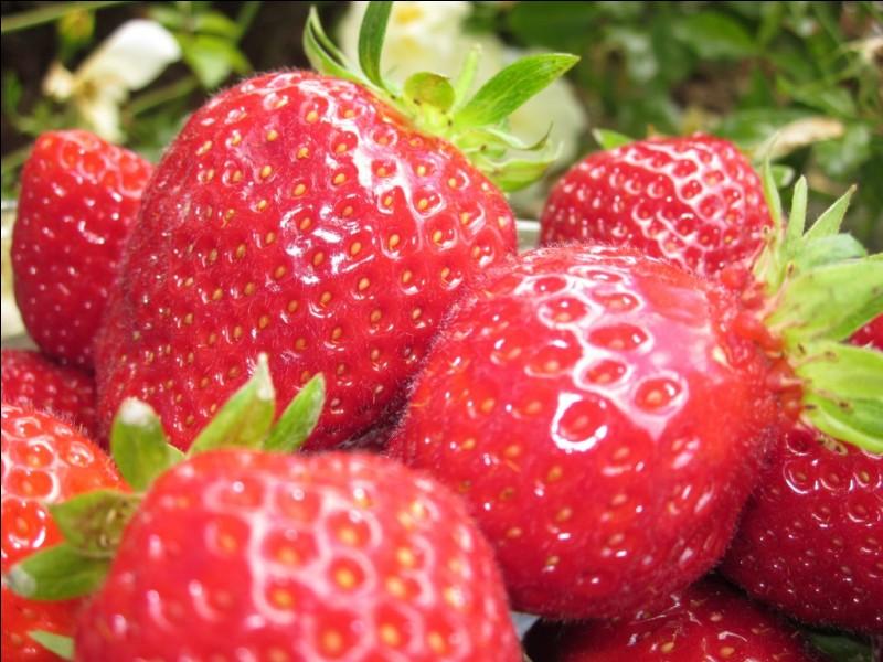 Avec toute objectivité de ma part, d'où proviennent les meilleures fraises ?