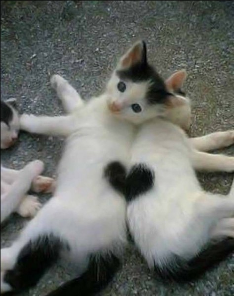 """Qui a réalisé le film """"Chat blanc, chat noir"""", sorti en 1998 ?"""
