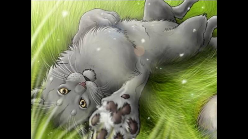 """Dans le livre """"Retour à l'état sauvage"""", Plume Grise est le premier chat que rencontre Rusty."""