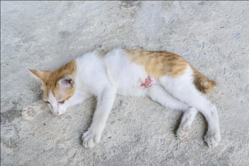 Un chat est blessé et tu ne sais plus quel remède prendre pour soulager la douleur. Que fais-tu ?