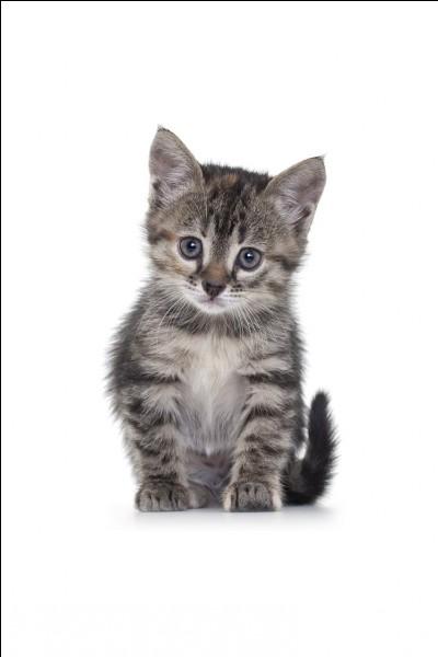 Elle est morte encore chaton, sa mère vient du Clan du Tonnerre et son père du Clan de la Rivière. Qui-est ce ?