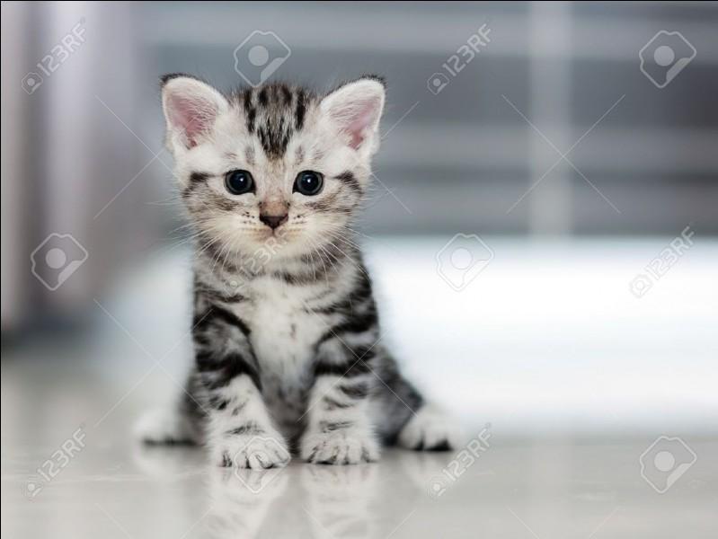 Je suis un chaton de trois lunes. J'ai péri lors d'un combat contre le clan du Vent car j'étais trop jeune pour me battre. Qui suis-je ?