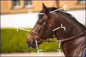 Comment nomme-t-on les parties 1,2 et 3 de ce filet ?