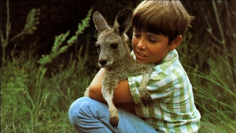 Comment s'appelle ce kangourou de série, créé dans les années 60 ?