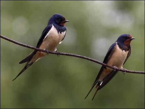 Combien y a-t-il d'oiseaux sur cette image ?
