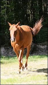 Comment doit-on aborder un cheval ?