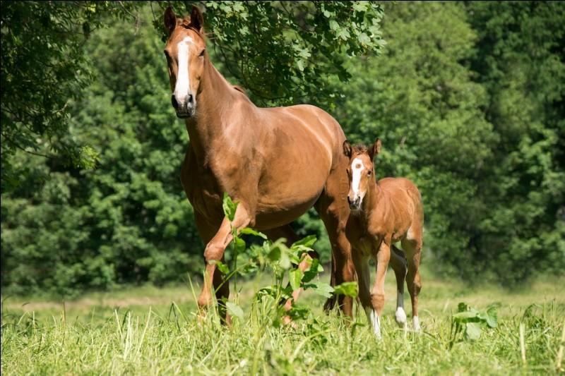 Combien de sens le cheval possède-t-il ?