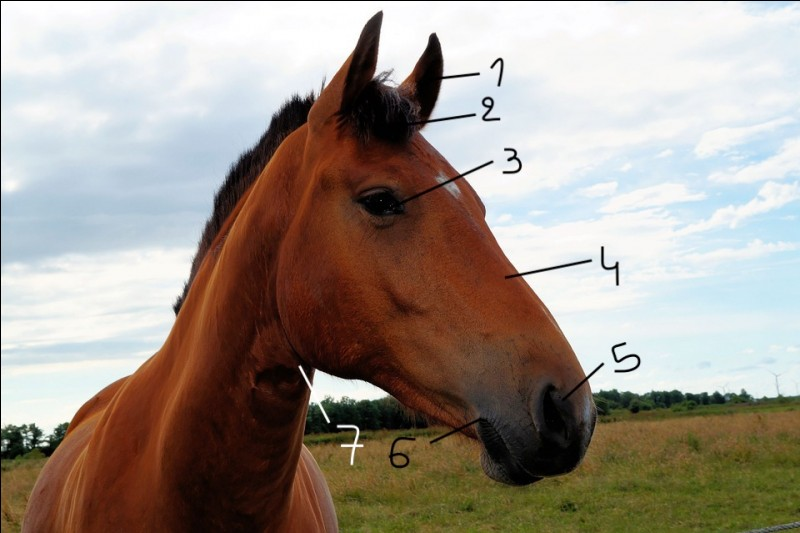 Comment nomme-t-on les parties 1, 2 et 3 de la tête ?