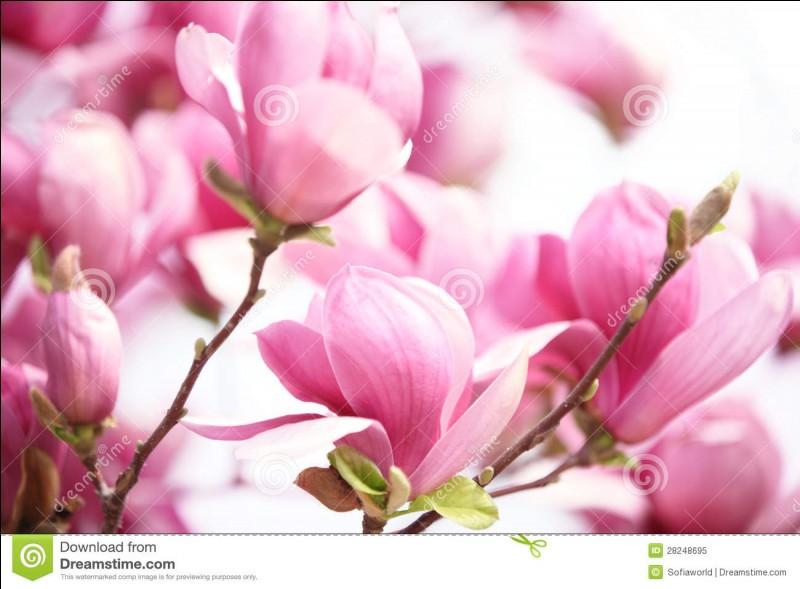 """""""Magnolia"""" est un film réalisé par Paul Thomas Anderson."""