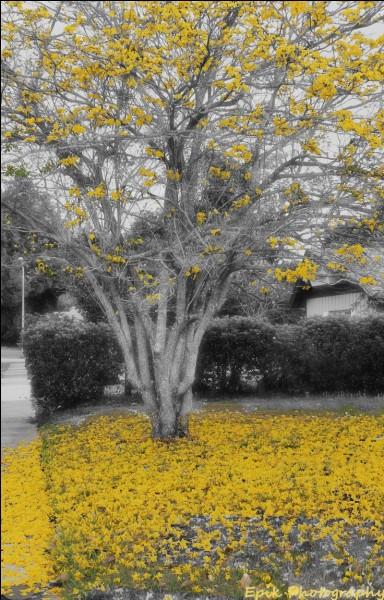 "De qui sont les paroles ""Le vent fera craquer les branches. La brume viendra dans sa robe blanche"" ?"