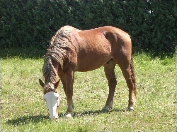 Comment se nomme la marque sur la tête de ce cheval ?