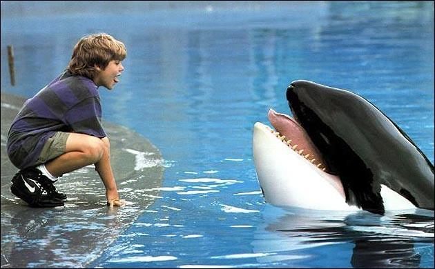 Comment s'appelle cette orque que le jeune Jesse doit sauver dans un film de 1994 ?