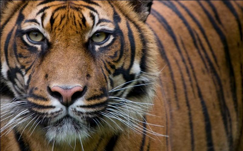 Parmi ces personnages de dessins animés, lequel n'est pas un tigre ?