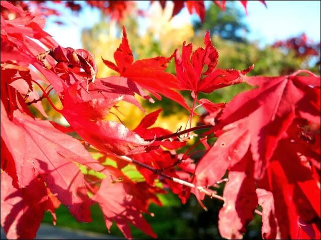 """Il existe à l'internationale une """"Fête de la mi-automne"""" qui est très célébrée. Sur quel continent la fête-t-on ?"""