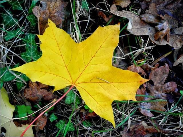 De quelle charmante chanson enfantine est tirée la phrase «La feuille d'automne, emportée par le vent, en ronde monotone, tombant tourbillonnant» ?