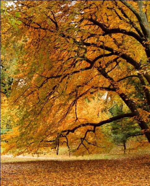 Le célèbre poème très musical de Verlaine, qui commence ainsi «Les sanglots longs Des violons De l'automne Blessent mon cœur D'une langueur Monotone», porte quel titre?