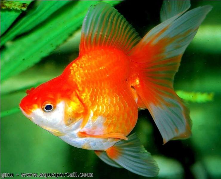 Généralement, les poissons pondent des œufs.