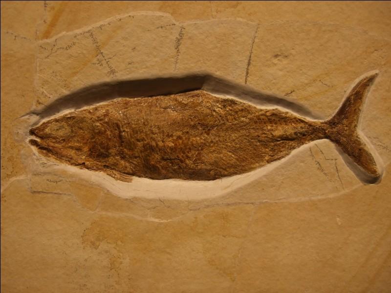 Le premier poisson est apparu il y a environ 310 millions d'années.