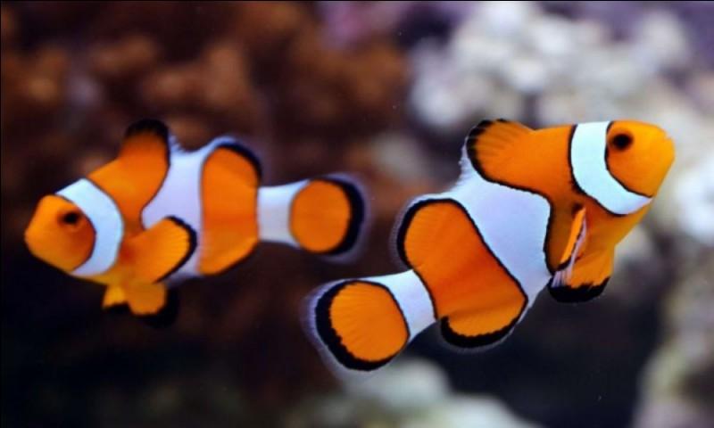 Où se trouvent les nageoires caudales d'un poisson ?