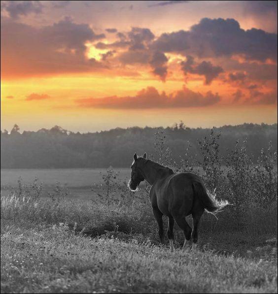 Quel nom portait le cheval de Don Quichotte ?