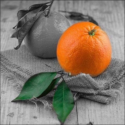 Quel fruit est issu du croisement entre la mandarine et la bigarade ?
