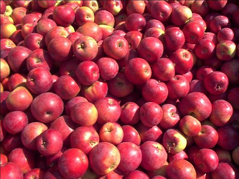 Dès que vous voyez des pommes, que vous sentez-vous obligés de faire ?