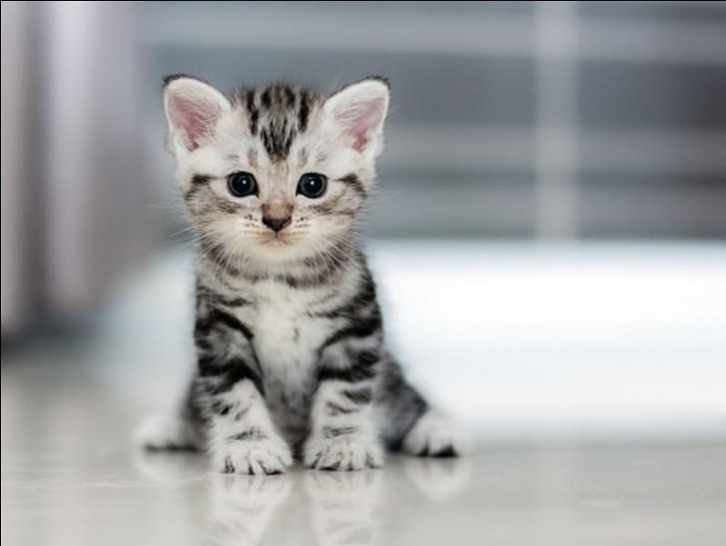 On vous a offert ce chaton mignon. Quel nom lui avez-vous immédiatement donné ?