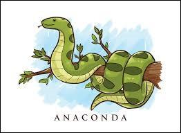 De quelle façon l'anaconda tue-t-il sa proie ?
