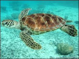 De quoi est faite la carapace d'une tortue ?