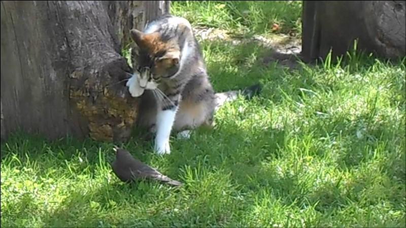 Quel chat a été chassé du Clan du Tonnerre et est devenu chef du Clan de l'Ombre ?