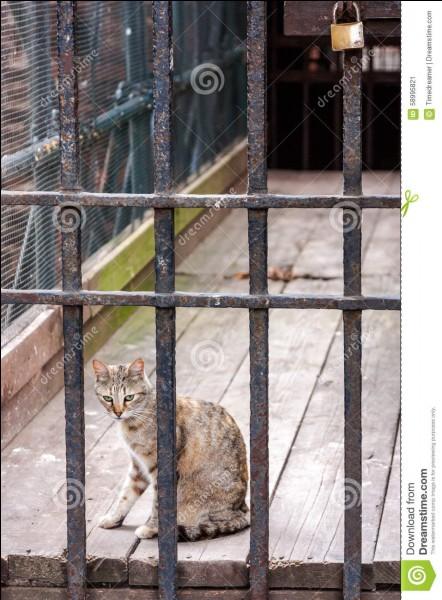 Quel chat du Clan de l'Ombre emprisonné par le Clan du Tonnerre est devenu aveugle ?