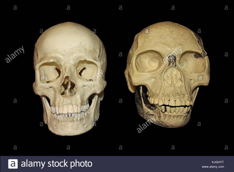 En 1912 Charles Dawson découvre l'homme de Piltdown dans le sud de l'Angleterre. Ce crâne était censé être le fameux chaînon manquant entre le singe et l'homme ; de quoi était-il fait ? (Photo non contractuelle)