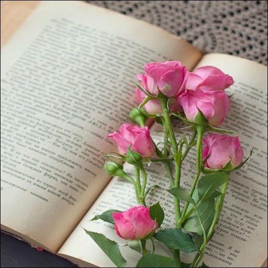"""Et enfin qui est l'auteur du livre """"Adieu ma jolie"""" ?"""