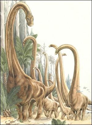 Quel Sauropode vivait en même temps que Barosaurus ?