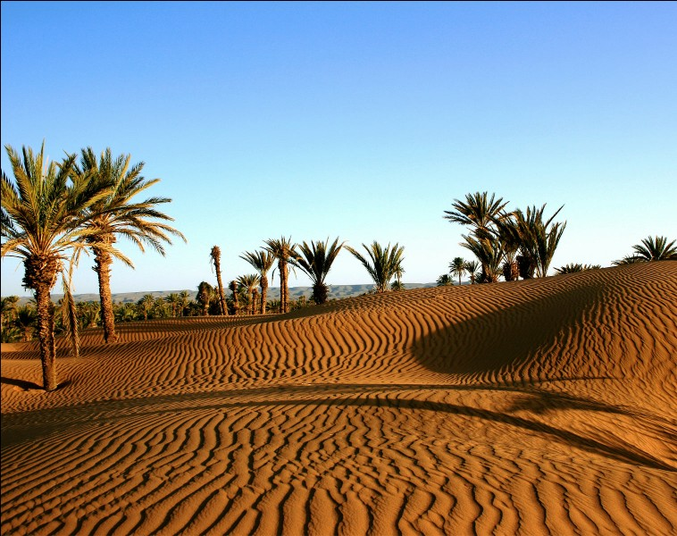 On y trouve de vastes étendues de désert.