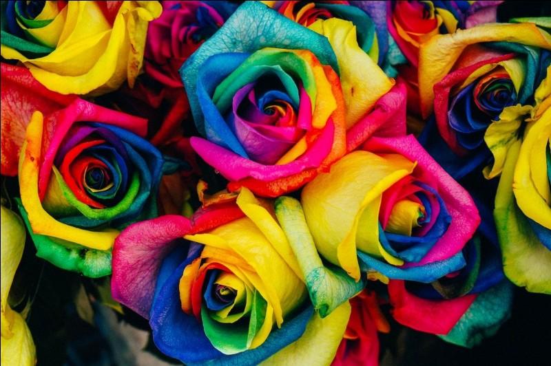 Ta couleur préférée est...