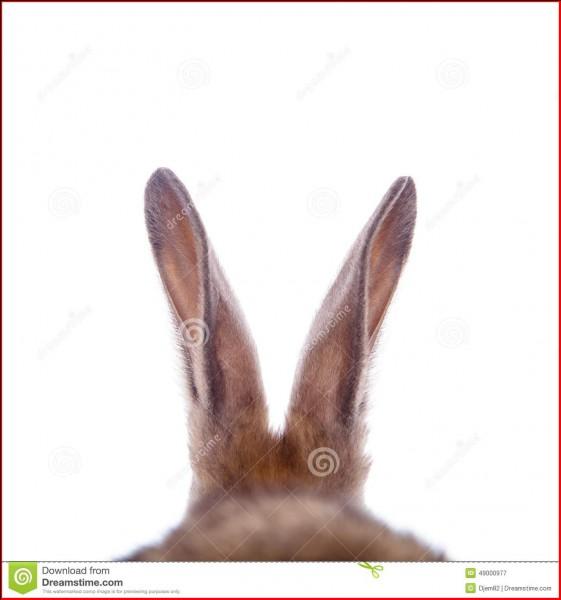 Les oreilles du lapin représentent :