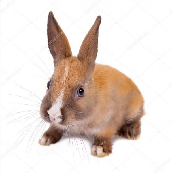 Comment appelle-t-on les longs poils situés au niveau du museau du lapin ?