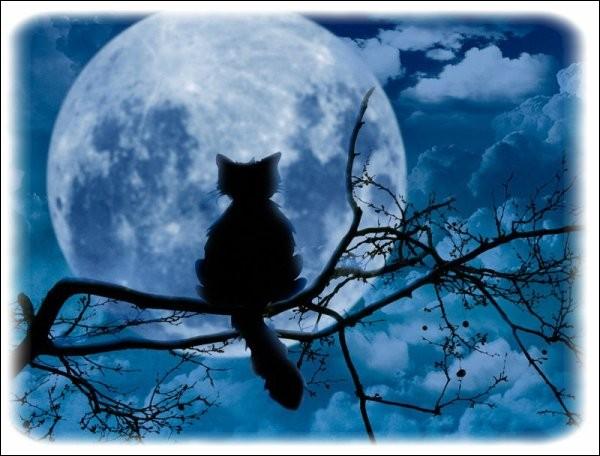 Le chat voit très bien, la nuit ! On dit qu'il est :