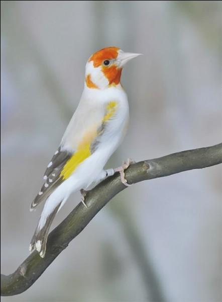 Quel est le nom de ce bel oiseau ?