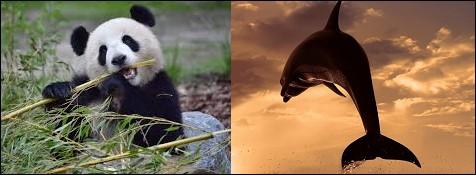 Son met préféré est le bambou.