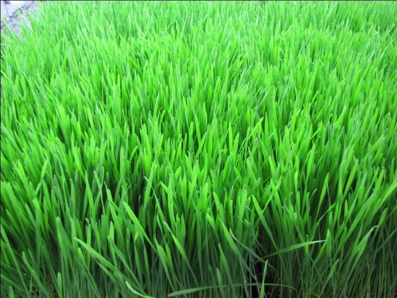 Quelle est la couleur de l'herbe ?