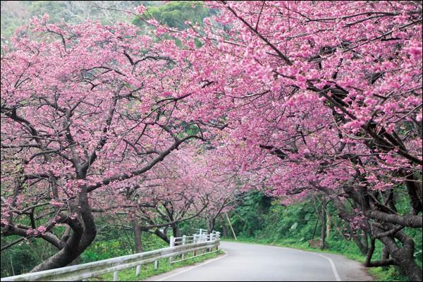 Quelle île japonaise est celle des centenaires ?