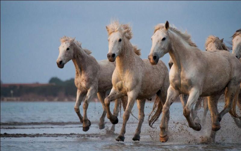 Les chevaux peuvent vivre de 45 à 60 ans.