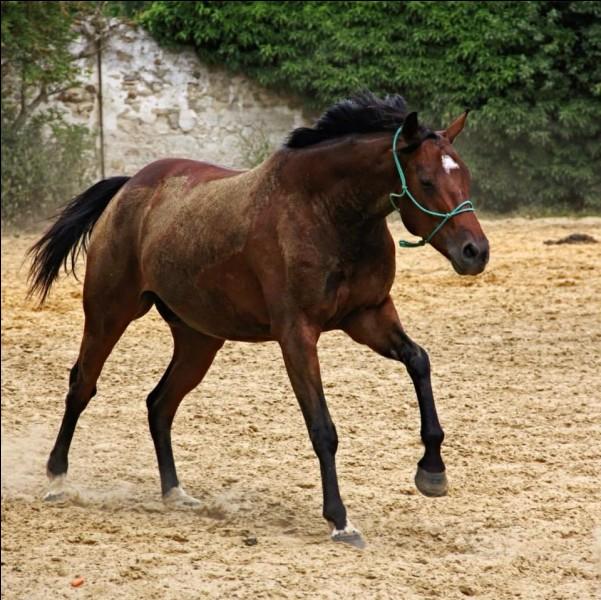 Les chevaux sont herbivores et aussi un peu omnivores.