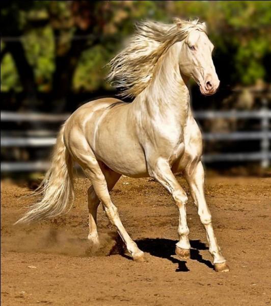 Quand le cheval a une colique, il ne fait que regarder le ciel.